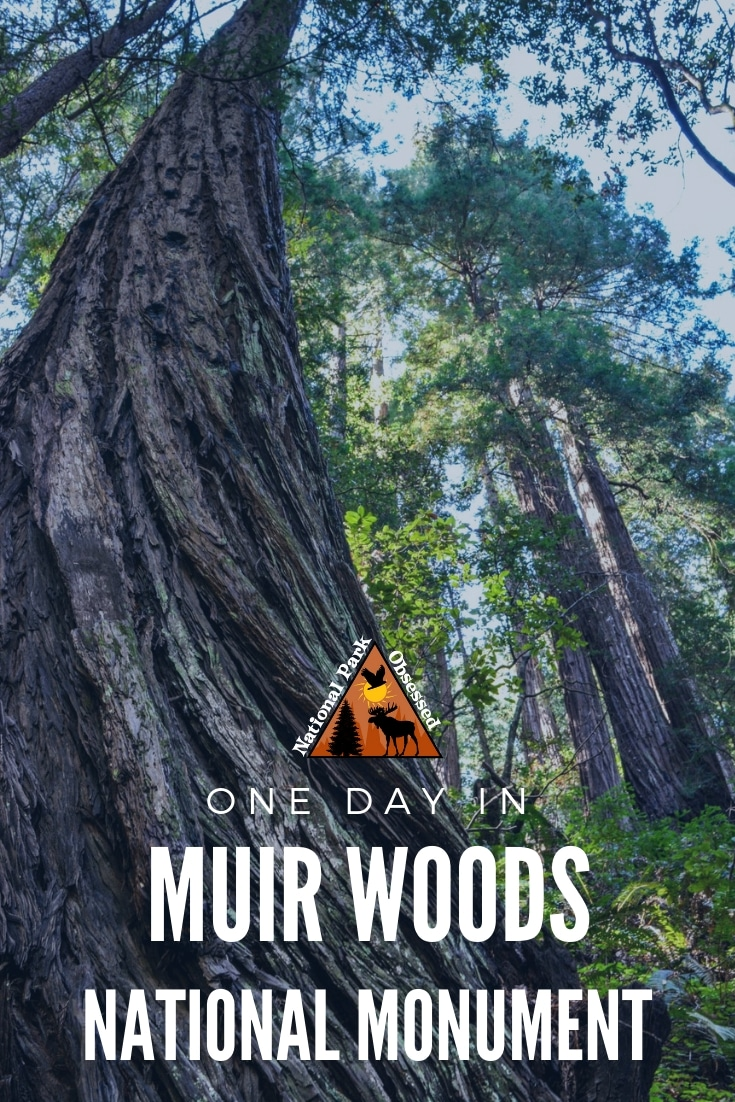 Looking to spend the day in outdoors without getting too far from San Francisco. Here is how to make the most of one Day in Muir Woods National Monument.  Muir Woods national monument  vacation. Muir Woods  national park | Muir Woods national park vacation | Muir Woods national park photography | Muir Woods national park itinerary | Muir Woods hikes | Muir Woods  itinerary #muirwoods #califoriana #nationalparks #nationalpark #nationamonument #findyourpark #nationalparkobsessed #nationalpa...