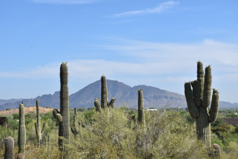 Learn about the plants of the desert - things to do in Scottsdale
