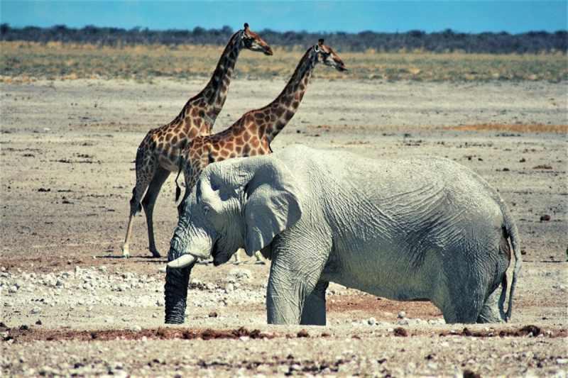 Etosha National Park, Nambia