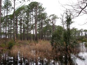 croatan national forest pet dog info