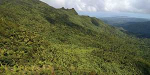 yunque national forest dog pet info