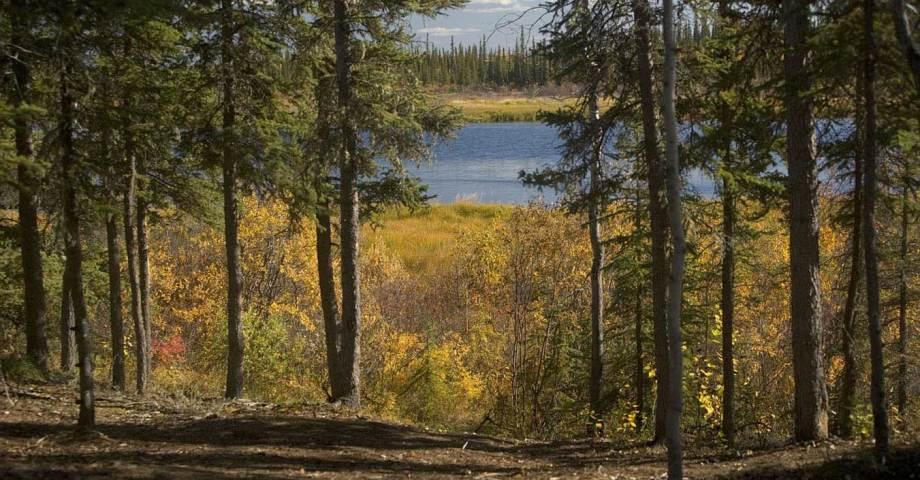 dog info and rules yukon charley rivers national preserve