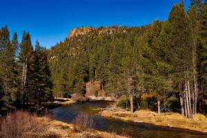 Dog info and rules Modoc National Forest