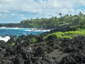 hawaii dog info