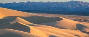 Mojave Trails National Monument dog info