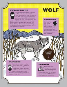 Wolf american animal safety tips