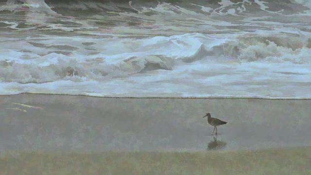 Assateague bird