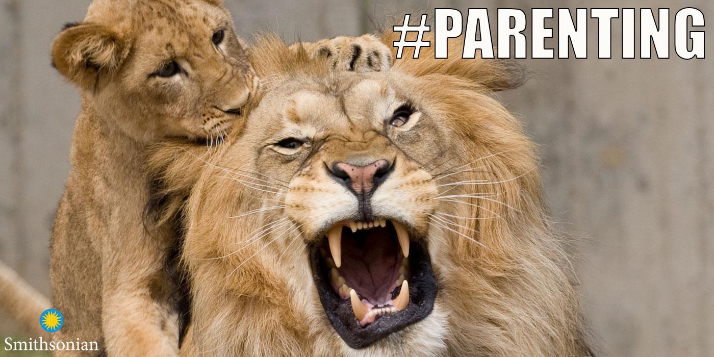 Pin Auf Lions Heart