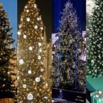Gli alberi in Duomo dal 2010 ad oggi: li ricordate tutti?