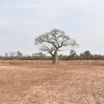 SEQUÍA EN EL CHACO: UNA VISIÓN DESDE EL TERRITORIO