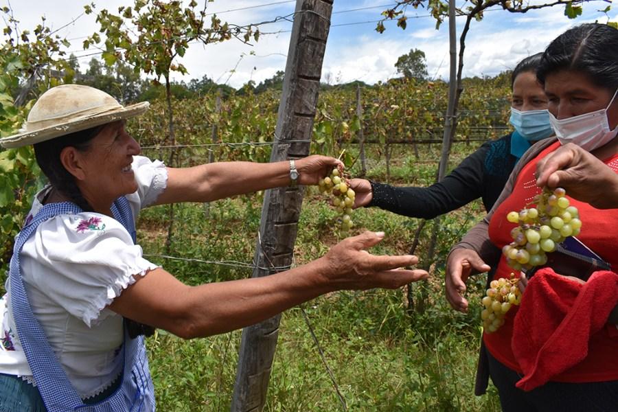 Visita a productora de vid orgánica en Colón Norte