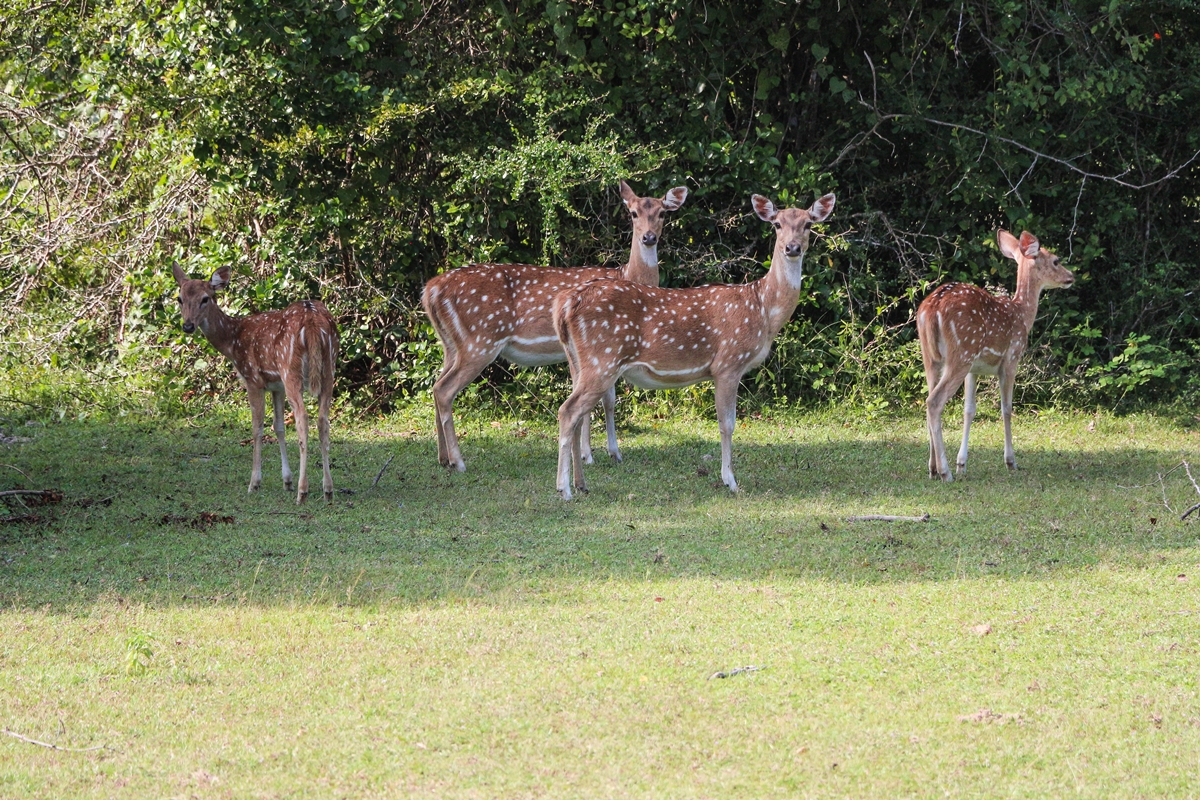 20 Photos That Will Inspire You to Visit Kumana National Park