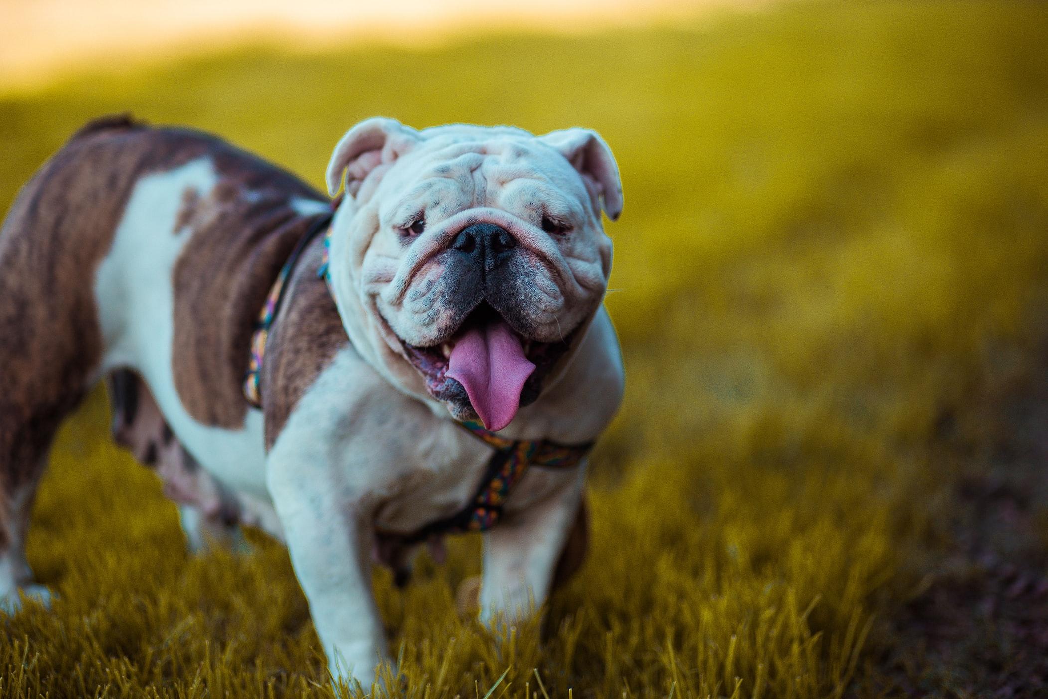NatrixOne Chomper Happy Pup