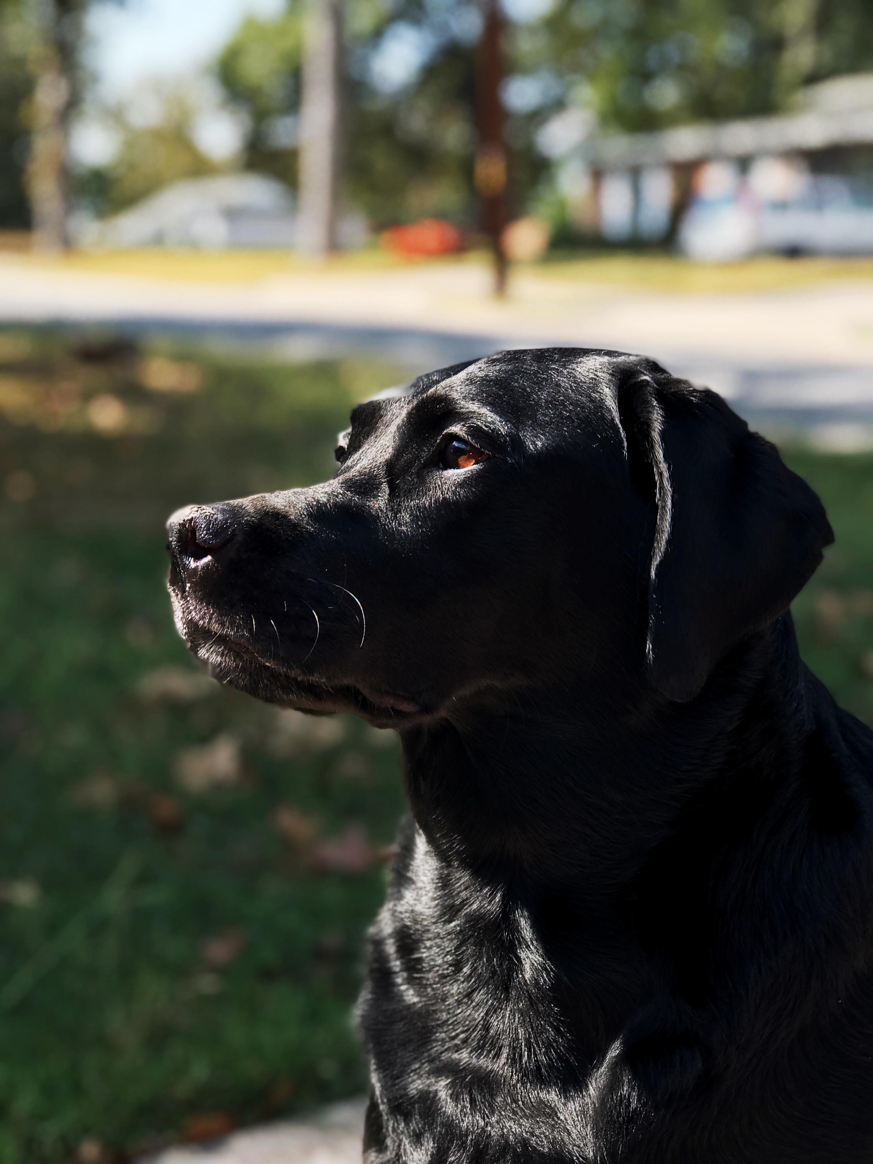 NatrixOne Black Puppy