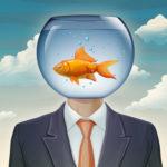 Goldfish Brain