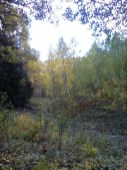 Picture1110171134_1