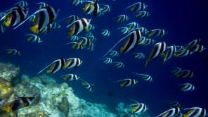 maldives-107