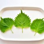 大葉の栄養・効能は夏にピッタリ!しそとどう違う?