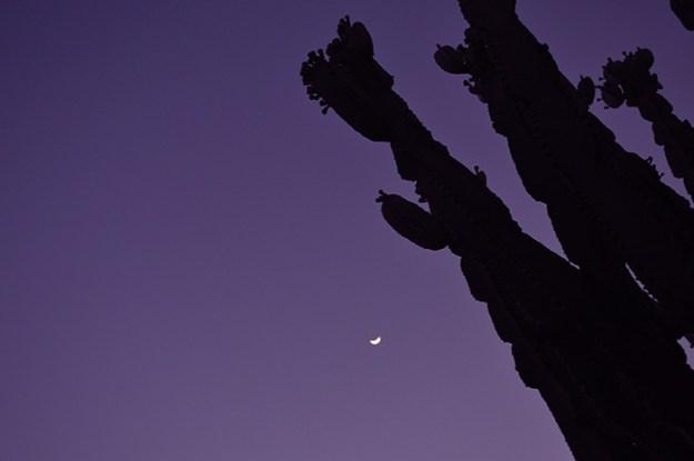 Cactus at Night // Nattie on the Raod