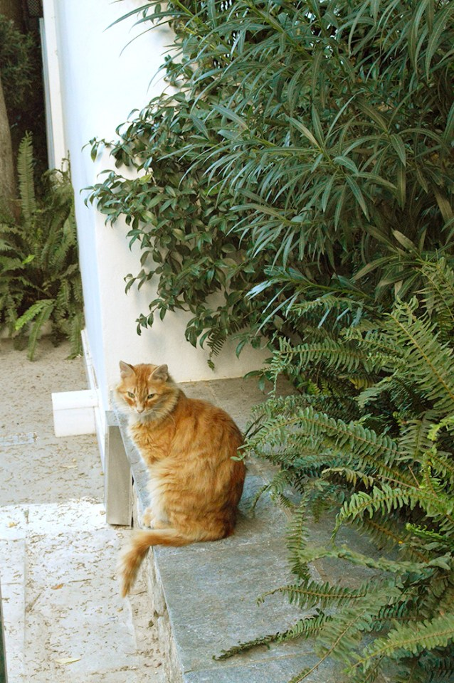 Cats of Greece // Nattie on the Road