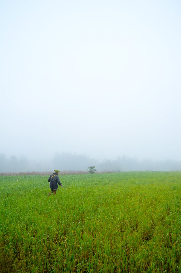 Farmer in the fog