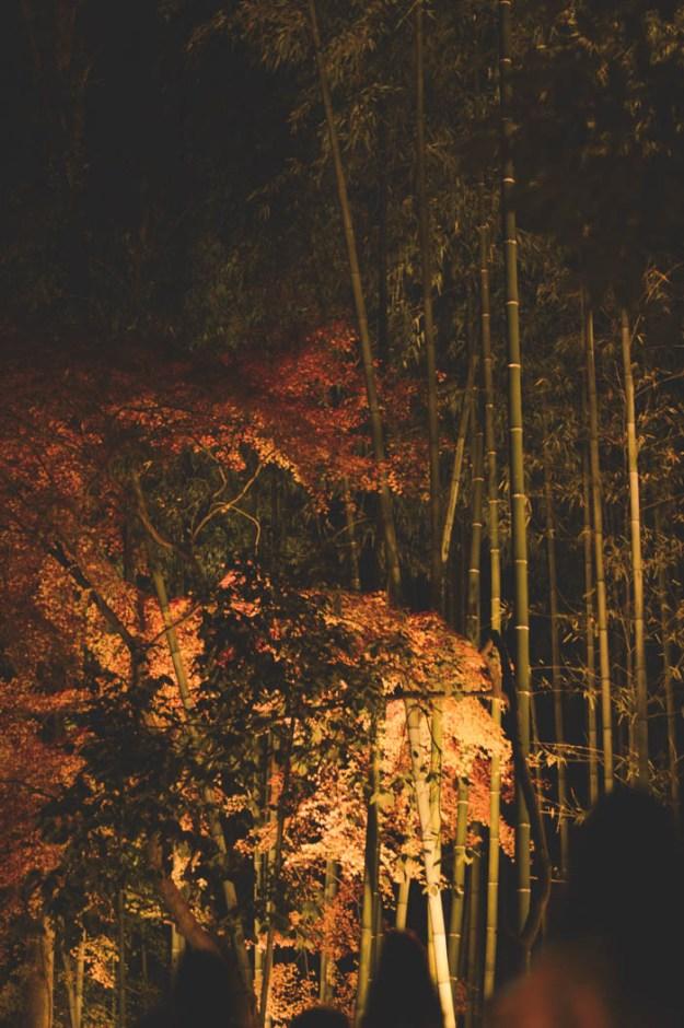 Bamboo Forest - Light Festival, Kyoto