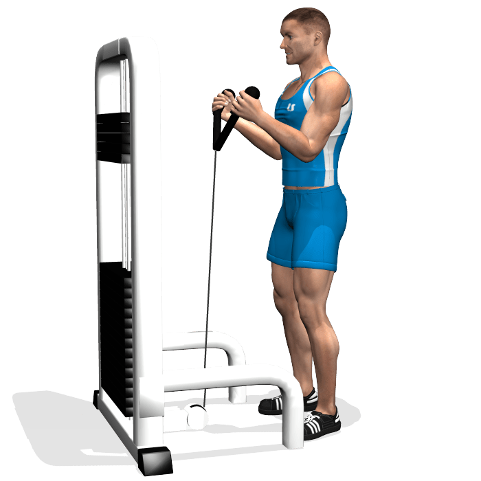 exercice-musculation-curl-barre-droite
