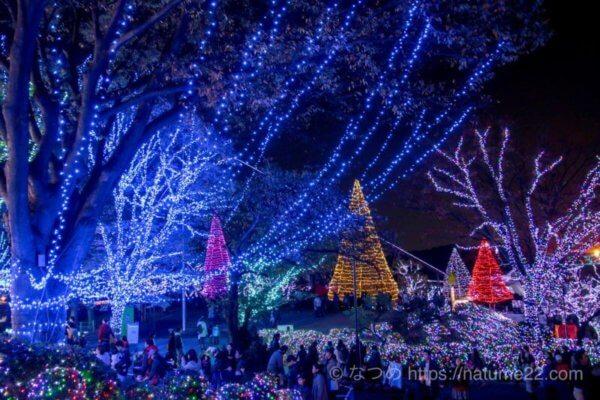 よみうりランド・じゅうぇるミネーション・木のライトアップ写真