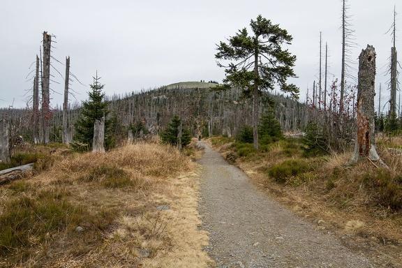Der Lusen im Bayrischen Wald