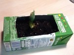Tetrabrick Planter