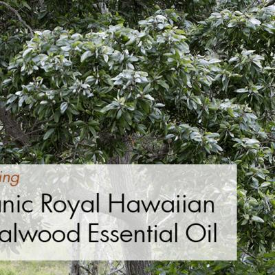 New Product: Organic Royal Hawaiian Sandalwood Essential Oil