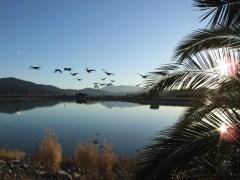 Beyond the Pond (Highland)
