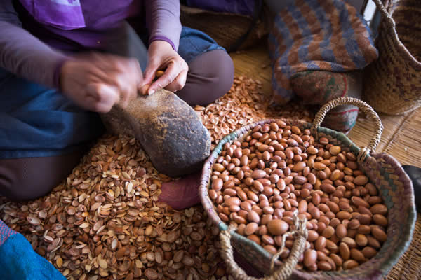 Argan Oil extracting for Hair Care