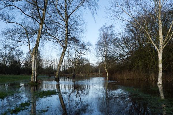Fletcher Moss Botanic Garden