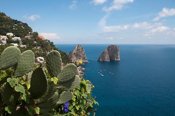 Naturalised Prickly Pear and Morning Glory, Capri