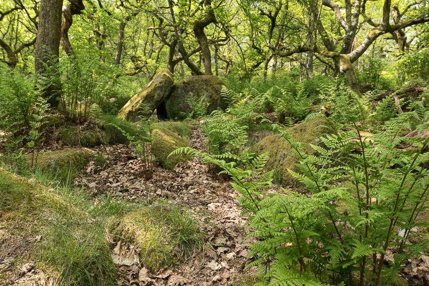Ancient oak/birch woodland