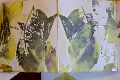 Parthenocissus