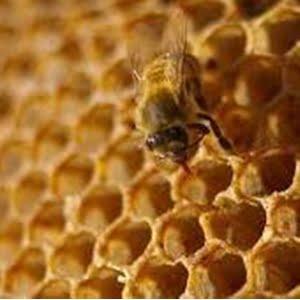 miel-cruda