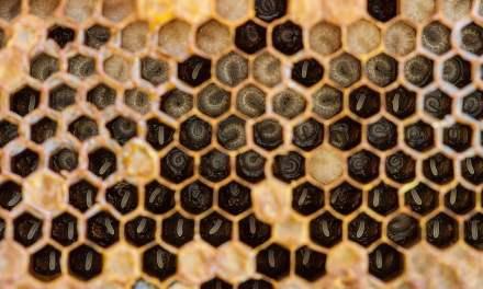 Beneficios de la miel pura para la salud