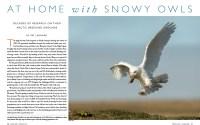 Cover of 2015 Spring Living Bird