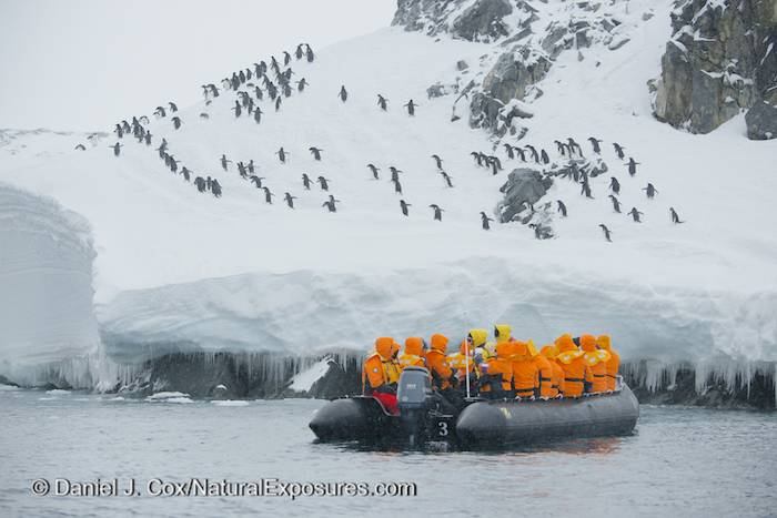 Seabourn Quest guests take a Zodiak ride to see the largest colony of Adelie penguins on the Antarctica Peninsula at Esperanza Base. Nikon D800 with 80-400mm lens.