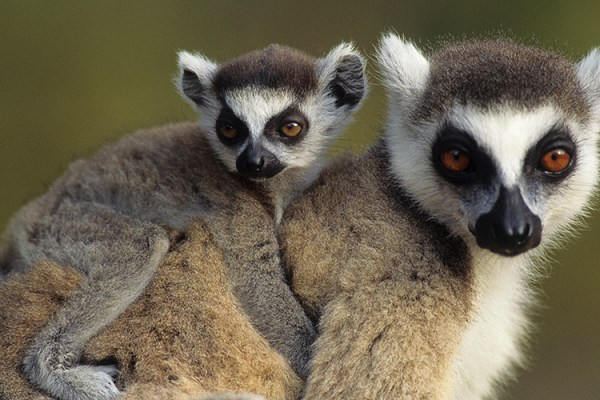Photo for 2018 Ultimate Madagascar Photography Tour
