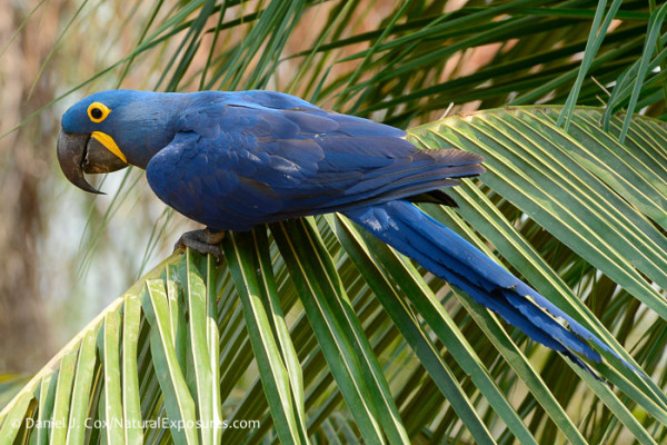 The hyacinth macaw doesn't care about soccer, but solar energy and LEED certification make its life better.