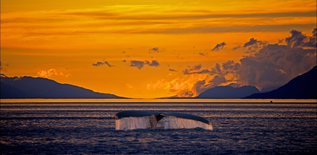 Alaska1 848.jpg