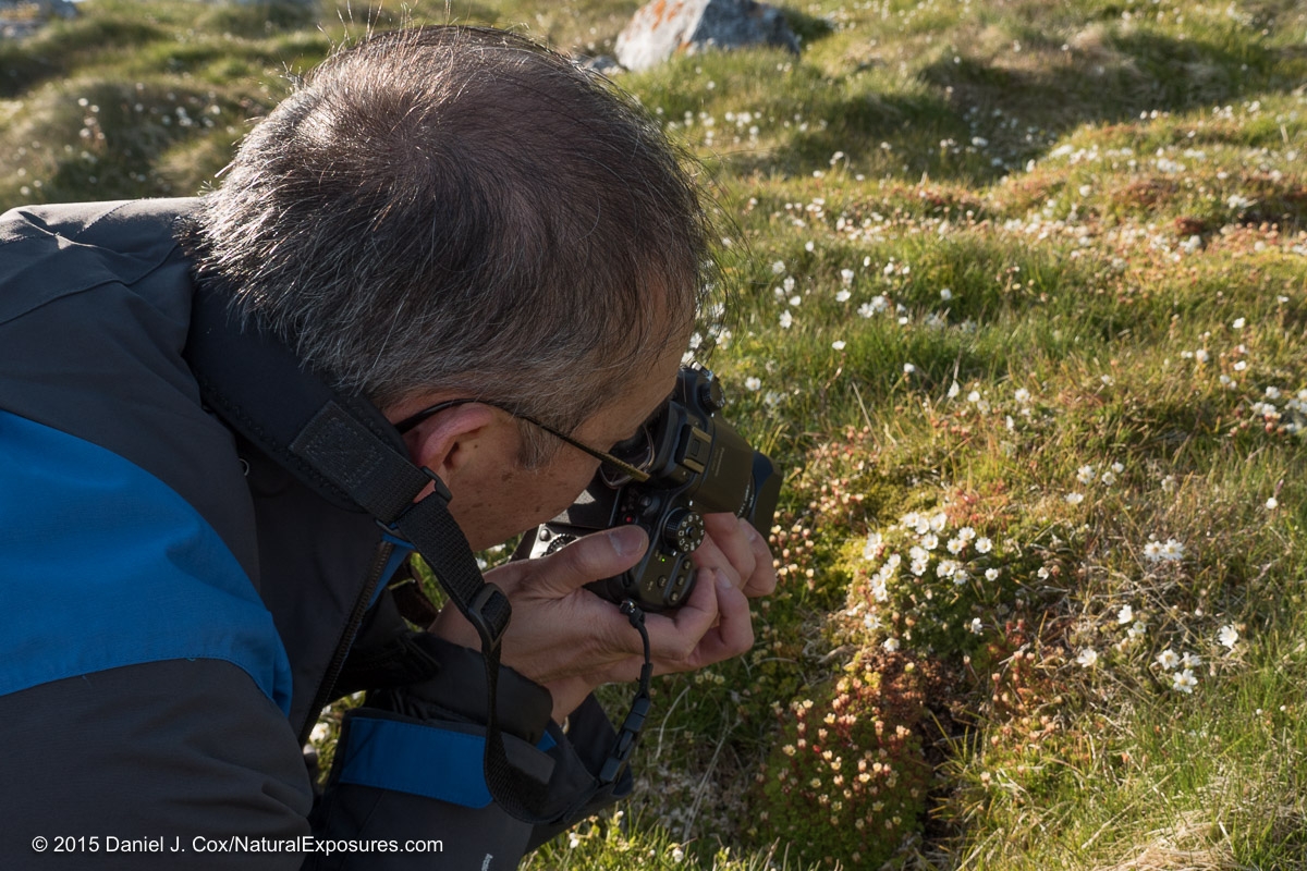 Wayne comes in close to shoot the beautiful wild flowers with the Lumix GH4 and the 45mm F/2.8 macro lens. Hornsund, Svalbard, Norway.