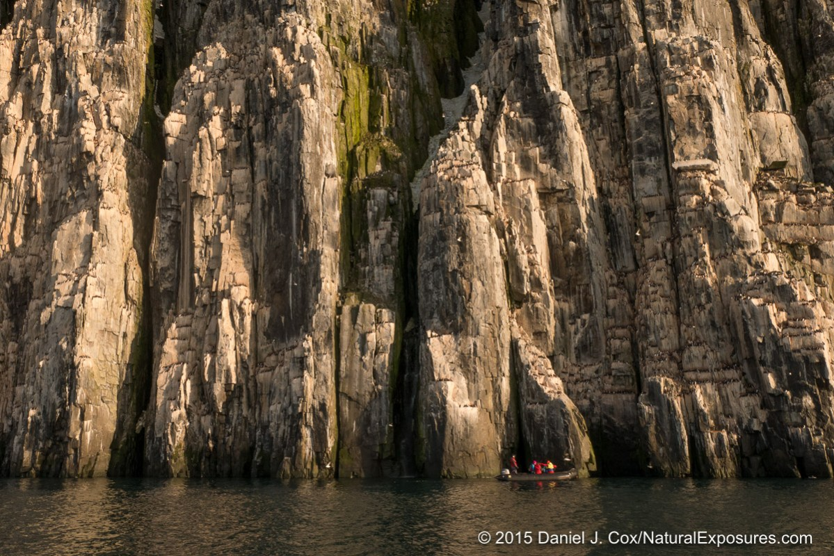 The cliffs of Alkefjellet are filled with hundreds of thousands of Brunich's guillemots and other birds. Lumix G7 with 12-35mm F/2.8