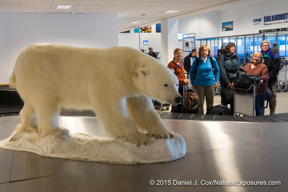 A stuffed polar bear in the Longyearbyen airport. Not exactly what we are looking  for unfortunately for the polar bear. NE Explorers Tanya Cox, Jeanne Schnackenberg, Joy Eastgate and Alice Garland.  Norway.