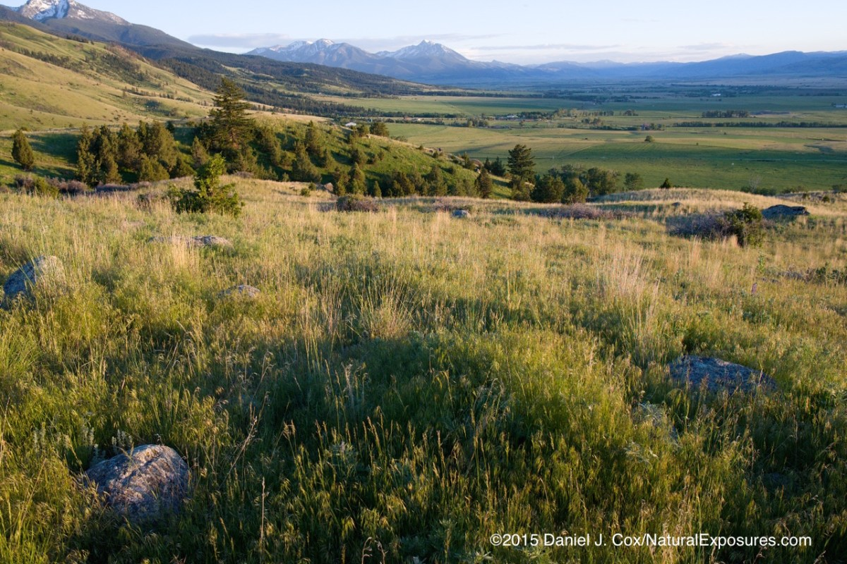 Paradise Valley bathed in evening light in early summer. Montana