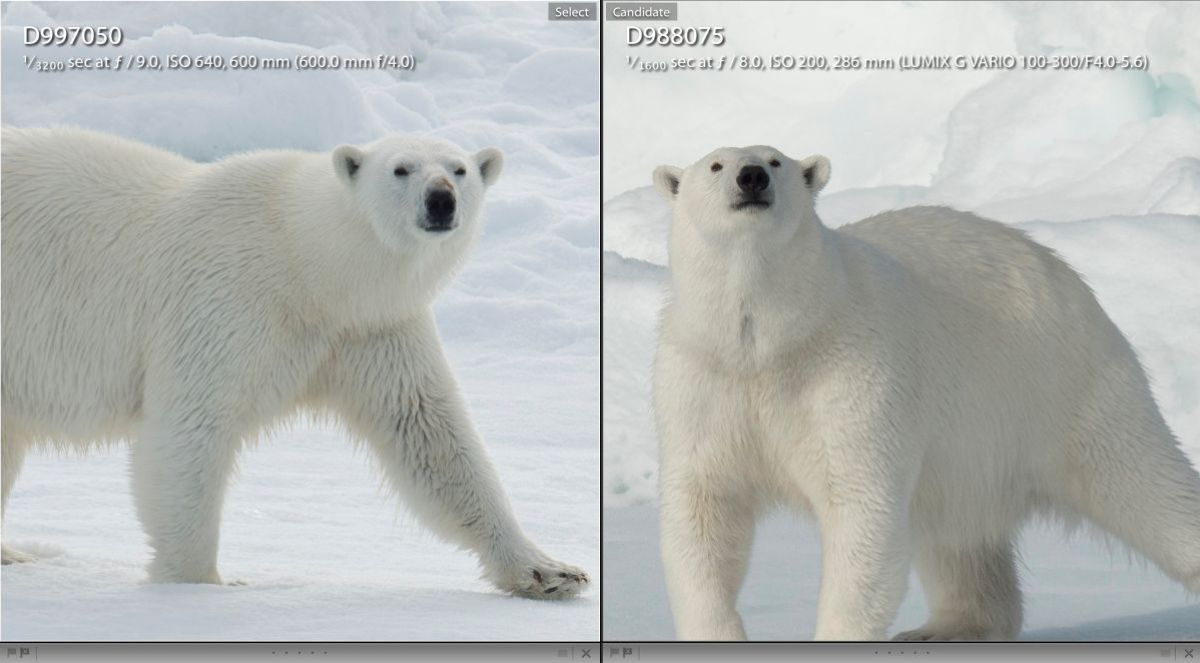 An unscientific, in the field comparison of  Nikon D4 using the $12,000 600mm F/4 lens and the Lumix GH4 with the 100-300mm zoom. Both these images are enlarged to 100% in Lightroom. Keep in mind that the image on the left was shot with a $7000.. camera and $12,000 lens. The image on the right was shot with a $1500.00 camera and a $499.00 lens.  Both have a small amount of sharpening but the amount was the exact same for each image.