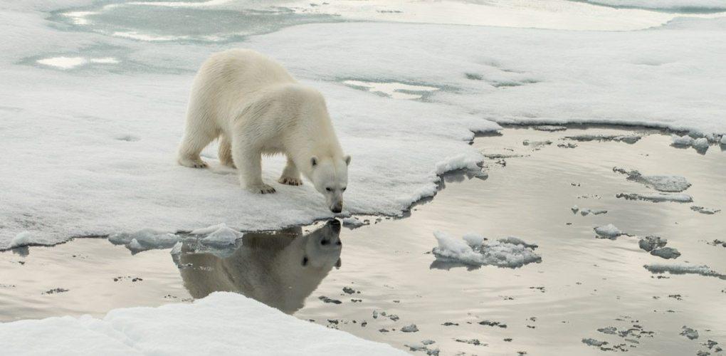 Svalbard__DSC4018.jpg